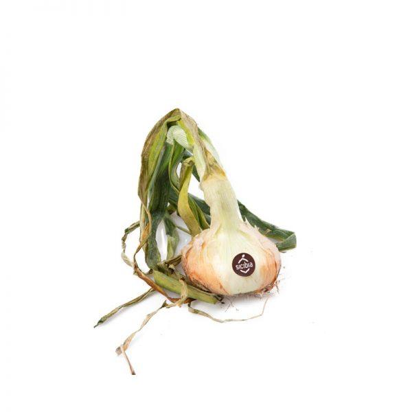 cipolla-giarratana